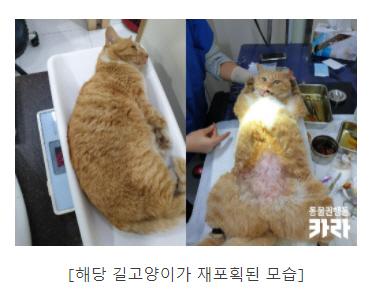 [인간-길고양이 공존 시대]③ 허점 투성이 TNR...동물 혐오 해소하는 동물권 교육해야